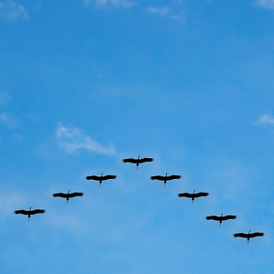 Why you Should Persuade Your Existing Customers to Migrate to B2B Ecommerce